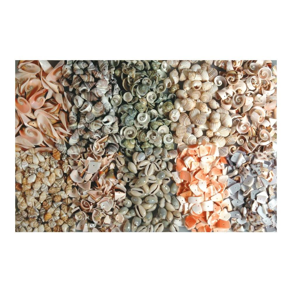 Muscheln gebohrt - großes 1kg Sortiment zum Basteln, 10 Sorten à 100g   Bejol Bastelshop